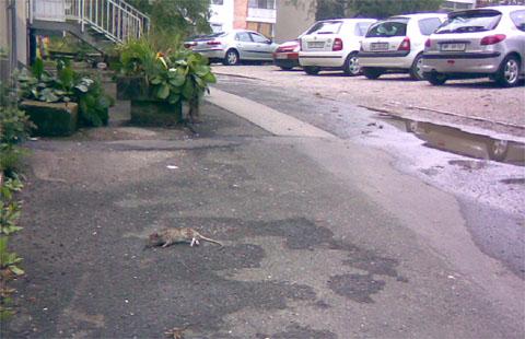 Kaj to leži na tleh? Ni menda podga...?
